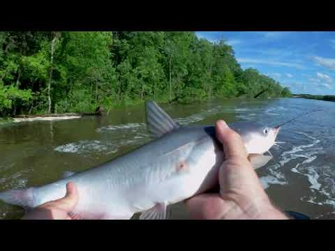 Catching A BUNCH Of Blue Cats In Crazy Fast Current - Warsaw MO