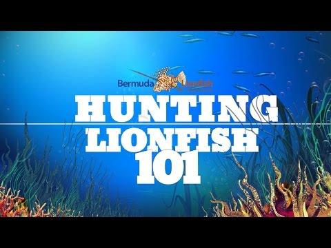 Lionfish Hunting 101