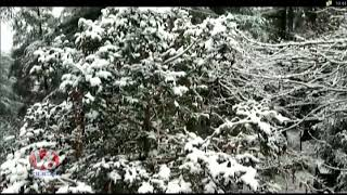 Beauty Of Nature, Snowfall Attracts Tourists In Himachal Pradesh