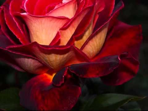 Сорвали розу в 17 лет.