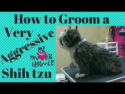 How to Groom a Shih Tzu full Groom