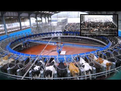 70 Point De-Laval Rotary Milking Parlour. Glenapp Farm Ayrshire.DairyCo.