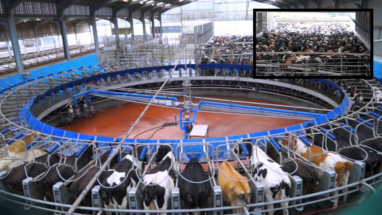 70 Point De Laval Rotary Milking Parlour Glenapp Farm