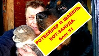 РОТВЕЙЛЕР И ЗАГОТОВКА ЩАВЕЛЯ.КОТ-ЗАНУДА.блог 52.воспитание и дрессировка собаки.