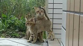 母猫の「出てきていいよ」の合図で子猫がゾロゾロと出てきた