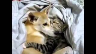 Дружба кошки с собакой!