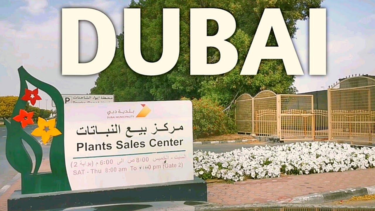 Dubai Municipality Nursery At Al Warsan Youtube