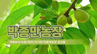 전북개복숭아 박종만농장