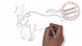 Как красиво нарисовать яростного быка