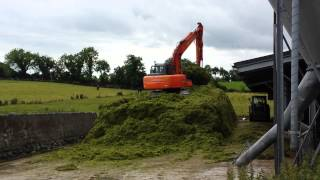 Putting up silage with an excavator.