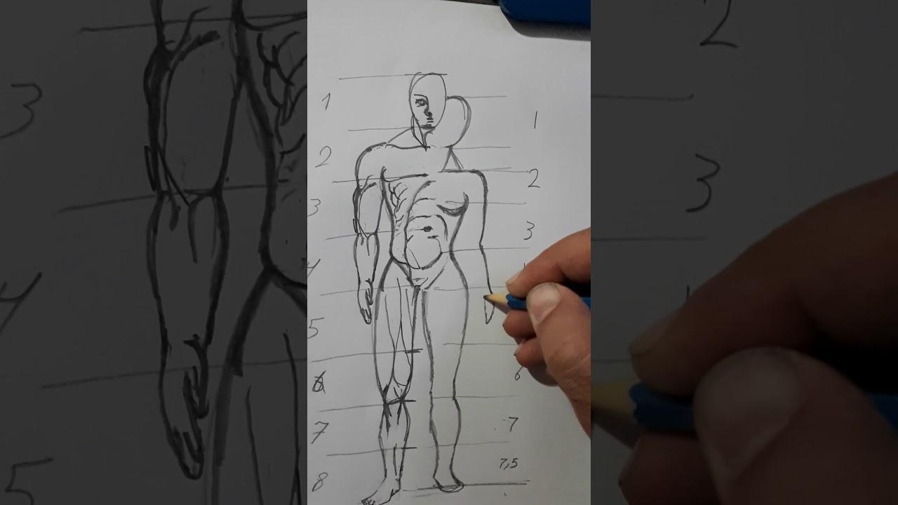 تعلم رسم نسب جسم المرأة How To Draw Ideal Proportion Female Youtube
