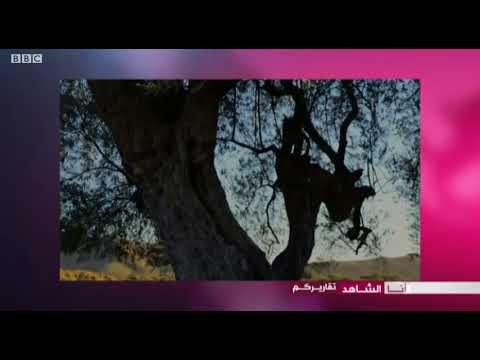 أنا الشاهد: كيف تغرس أشجار الزيتون في المناطق الجبلية بتونس  - نشر قبل 2 ساعة