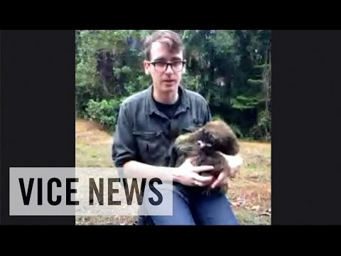Hangout with VICE News and Sloths in Panama