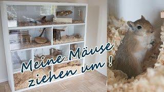 Rennmaus Gehege/ Meine Mäuse ziehen um