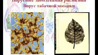 Презентация на тему Царство вирусы  Вирусные заболевания