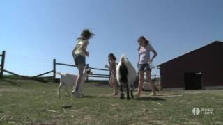 FERMES DES FALAISES : élevage et ferme pédagogique en Normandie