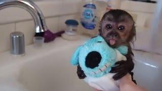 Zwierzęta Kochają Czas Kąpieli - Milutkie Kompilacja