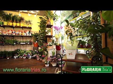 Floraria Trias - Prezentare generala