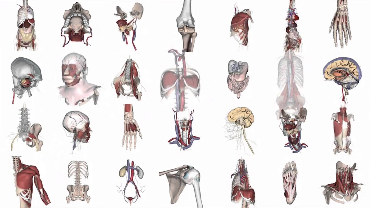 Primal Pictures 3D Real-time Human Anatomy - YouTube