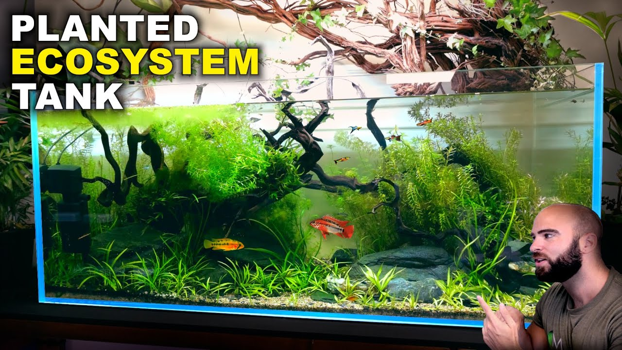Aquascape Tutorial: EPIC 4ft NO WATER CHANGE Ecosystem Aquarium (How To: Step By Step Guide)