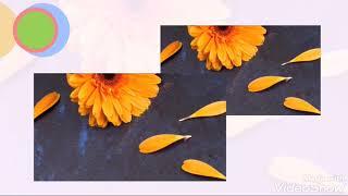 Flower wallpapers - Colorful Flowers in HD & 4K screenshot 2