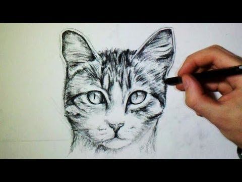 Comment dessiner un chat tutoriel youtube - Tete de chat a colorier ...