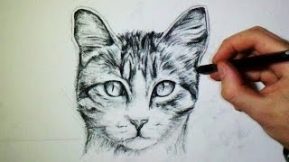 comment dessiner facilement un chat
