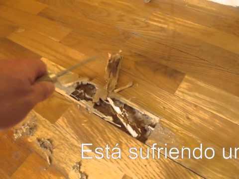 Parquet comido termitas wmv youtube for Carcoma o termitas