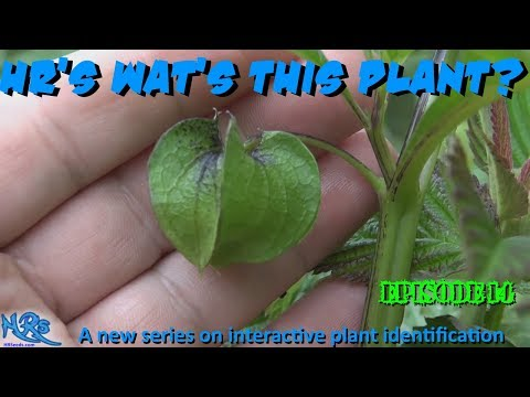 ⟹ HR's WAT'S THIS PLANT | Episode 14 | Plant Identification Needed!