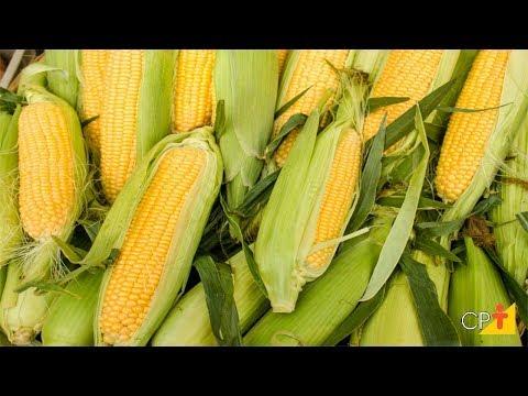 Clique e veja o vídeo Curso a Distância Produção de Milho em Pequenas Propriedades- Sementes- Cursos CPT