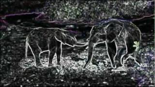 Stylus Rex - Blatant Elephant.
