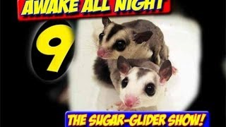 AWAKE  ALL NIGHT THE SUGAR-GLIDER SHOW EPISODE 9  PNK Video Productions pnkvidpro.com