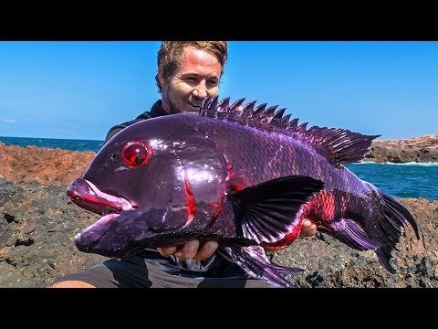 10 Most Unique Fish In The Ocean!