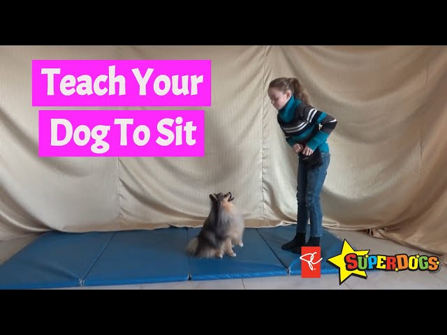 SuperDogs | Teach Your Dog To Sit | Dog Training