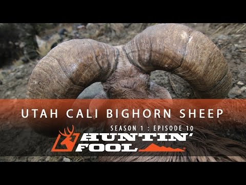 Huntin' Fool TV Season 01 Episode 10 - Utah Newfoundland California Bighorn