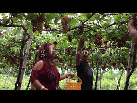 La Union Grape Farm