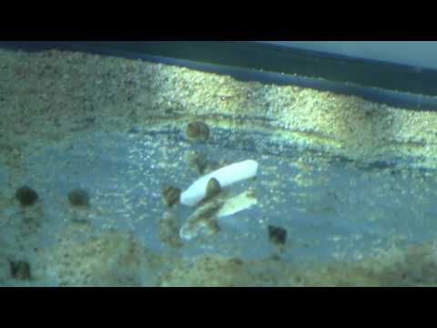 Adding Calcium For Snails, Clams, And Other Invertebrates