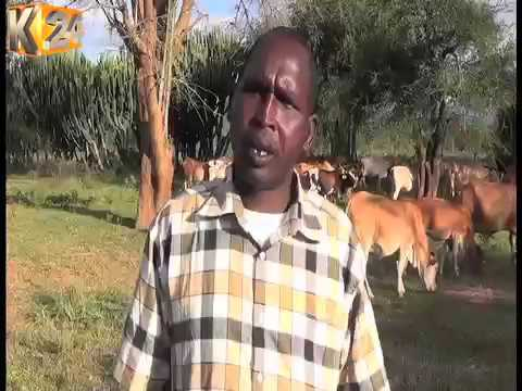 W. Pokot residents want their livestock branded to curb the vice.