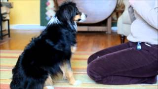 Coco Hw2 Part 2 -canine Fitness Trainer