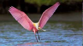 Wildlife Photography Workshop / Wildlife Photography Tour - Spoonbills & Shorebirds in Florida