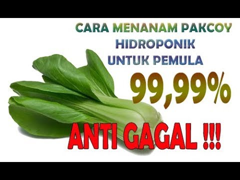 How To Grow Pakcoy Hydroponics 99 99 Anti Failure