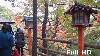 【東京・世田谷区紅葉狩】 等々力渓谷は、東京都区部では唯一の自然の渓...