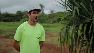 Why we do this work: Coconut Rhinoceros Beetle Response Team