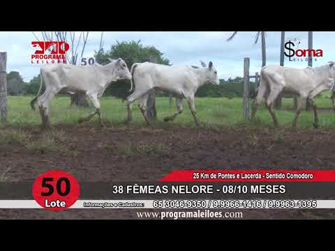 LOTE 50R