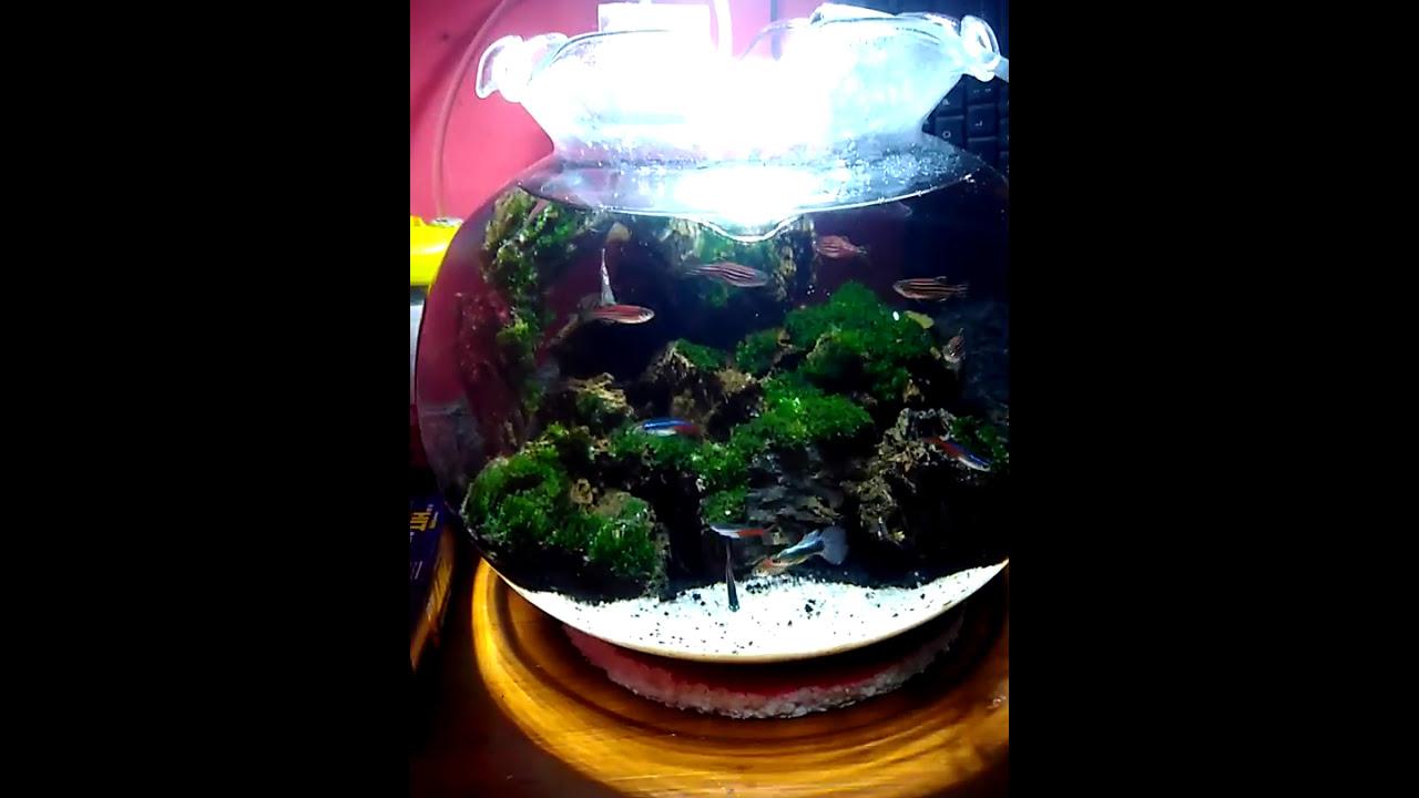 tutorial aquascape aquarium bulat indonesia - YouTube