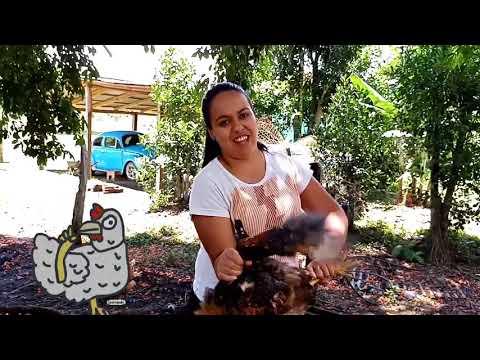 matando frango caipira no sitio
