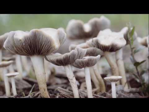 An iNaturalist Introduction to Mushrooming