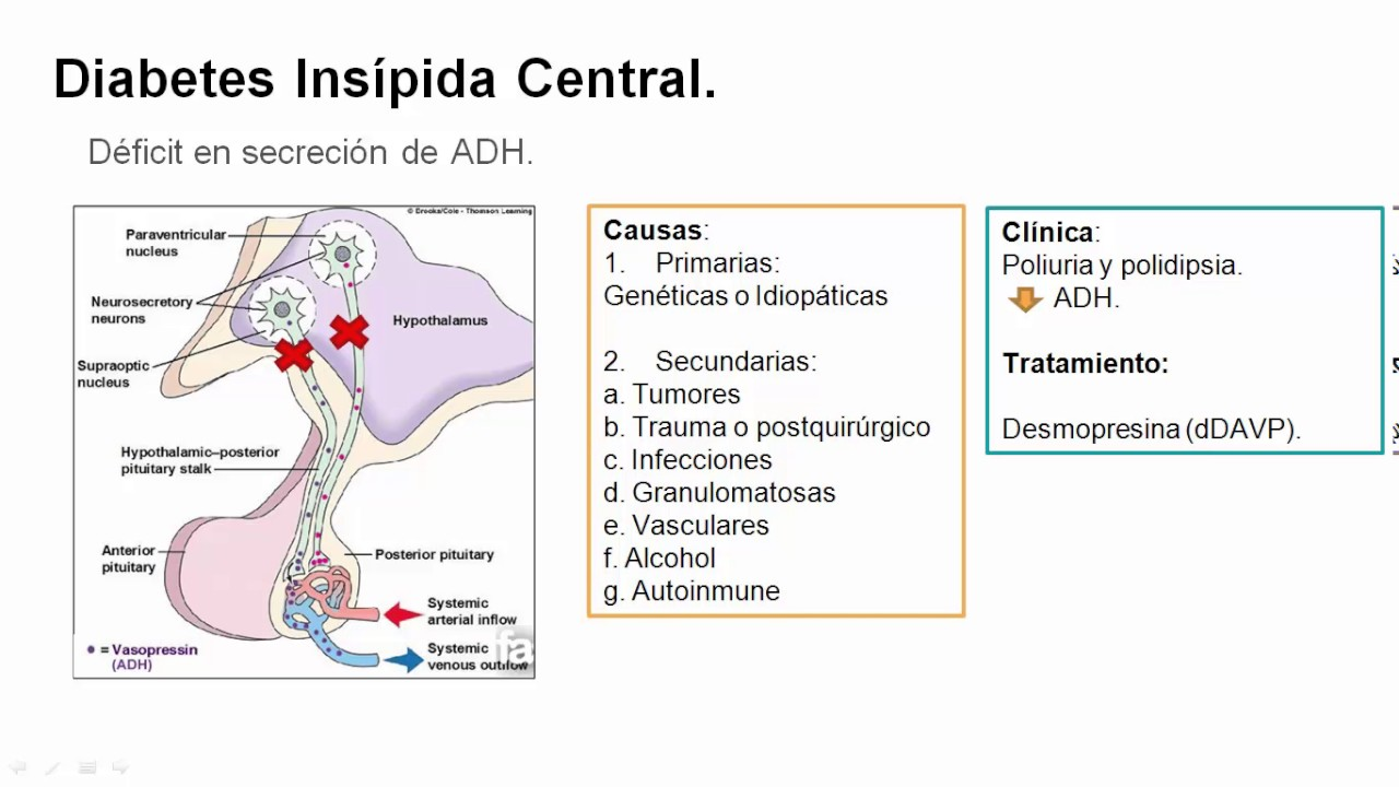 video de fisiopatología de la diabetes hhnk