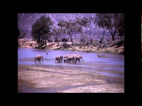 Kemp Africa Safari 1965