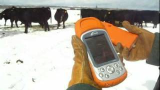 Long Range EID Ear Tags and Management Software